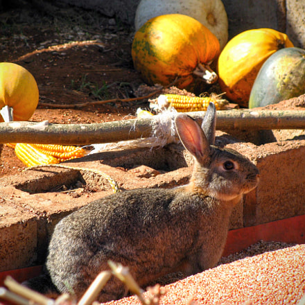 Squash and Bunny, Canon POWERSHOT SX100 IS