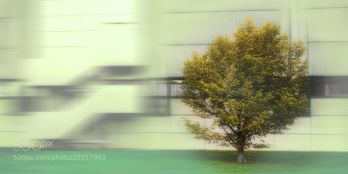 Photograph Citytree by Thomas Christoph on 500px