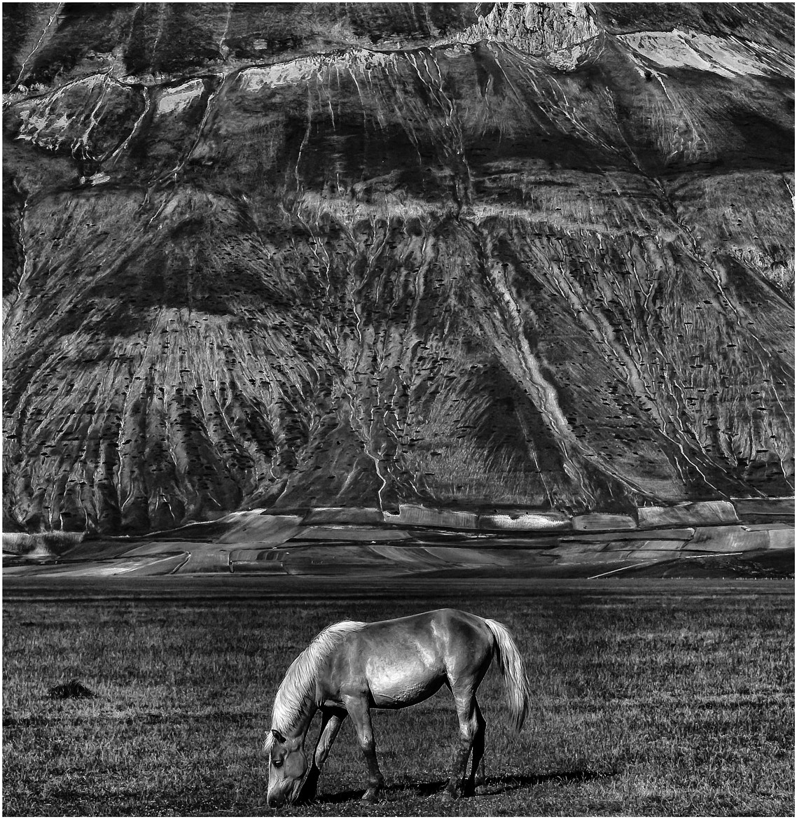 Photograph The horse by Roberto Paglianti on 500px