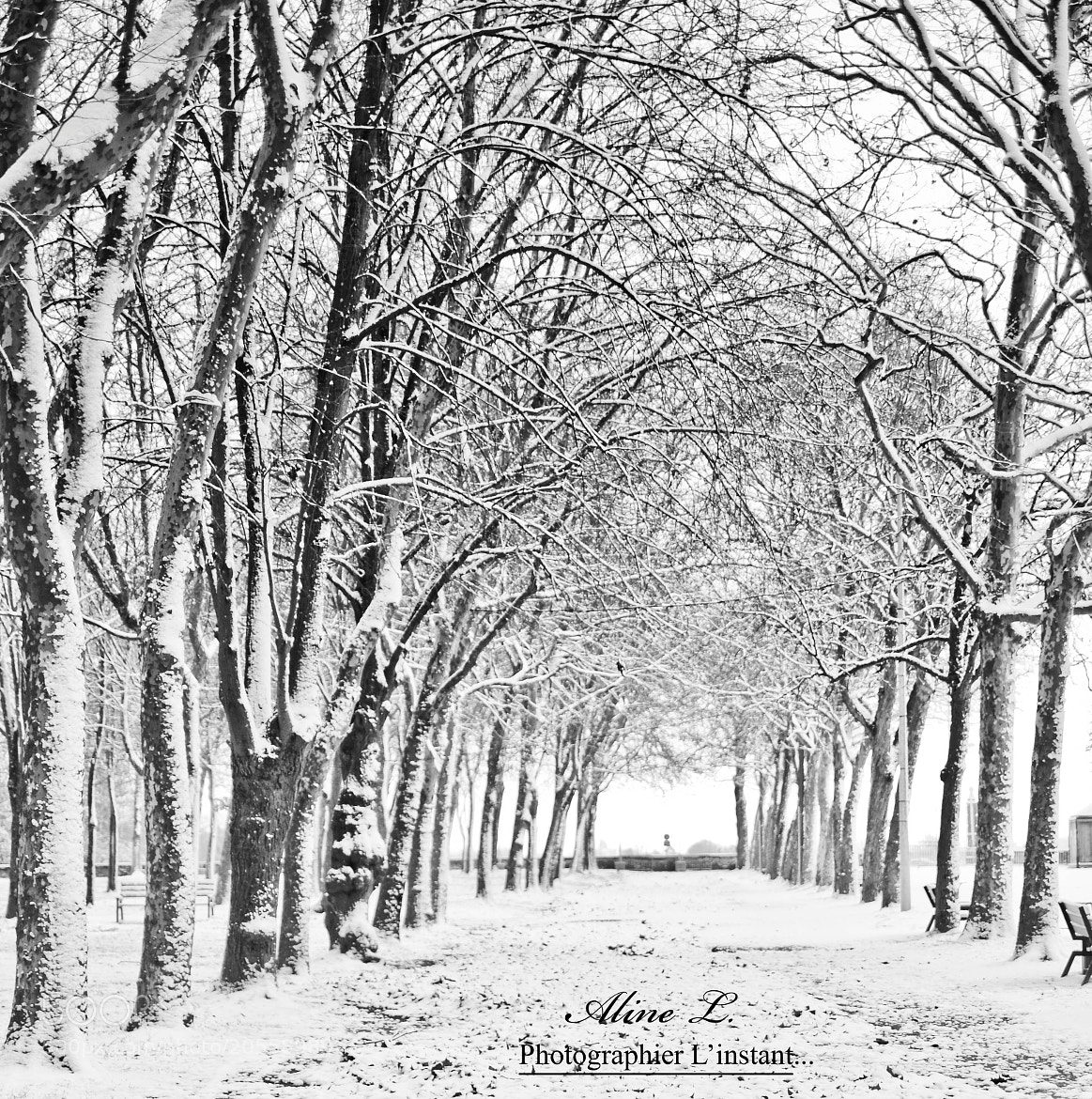 Photograph Hiver 2012 by Aline -L on 500px