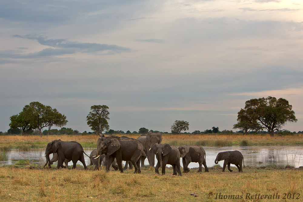 Photograph At the waterhole by Thomas Retterath on 500px