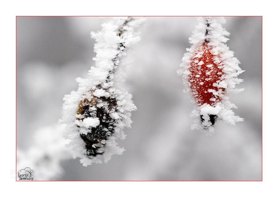 Photograph Black-red by Lukasz Dawidowicz on 500px