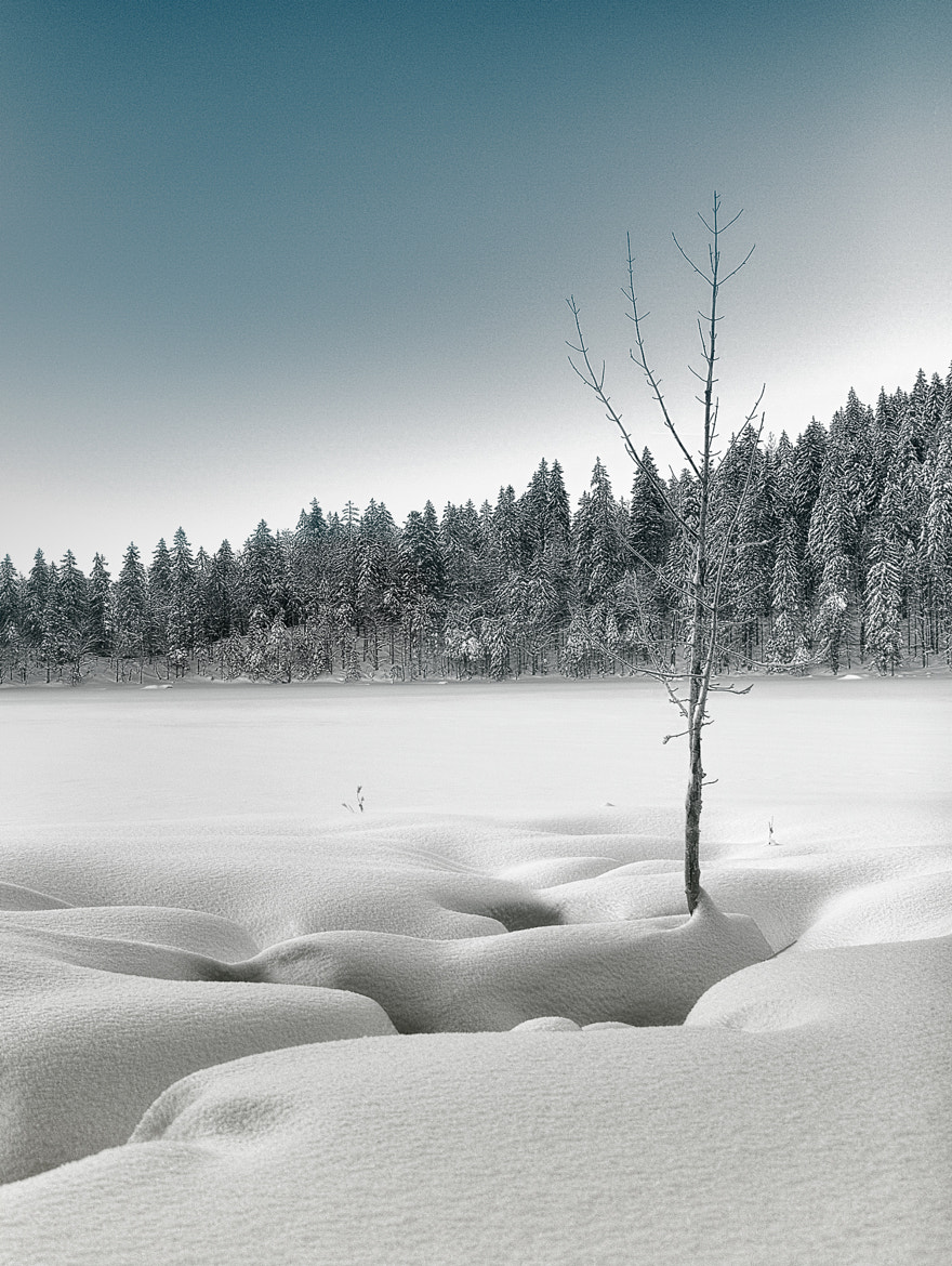 Photograph Feldsee - Black Forrest by Alexander Schimpf on 500px