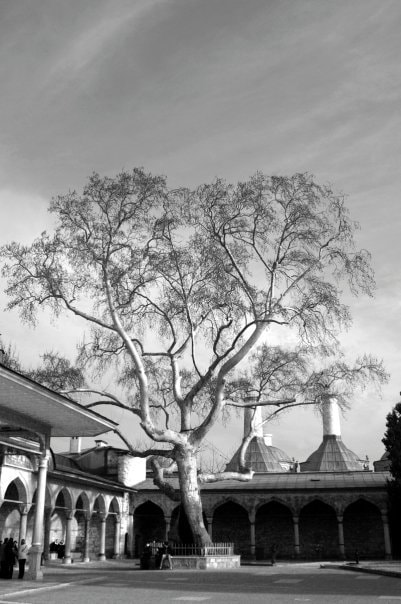Photograph Guardian of Topkapi Palace by Illias S on 500px