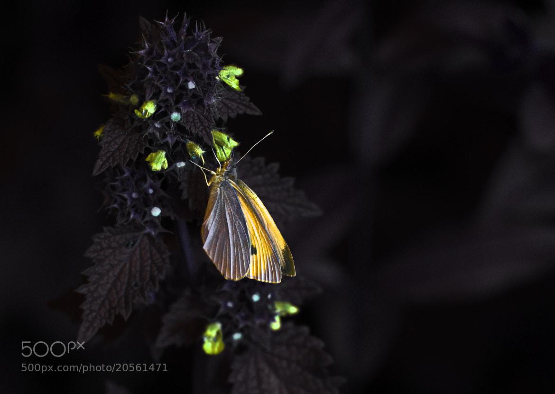 Photograph Butterfly Effect by Adrian Kraszewski on 500px