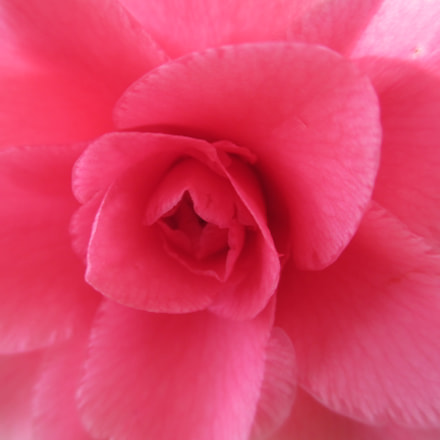 camelia, Canon POWERSHOT A4000 IS