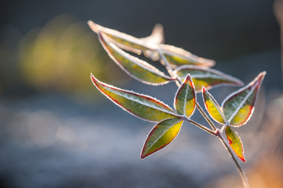 Photograph In cold morning by Hidemi Katayama on 500px