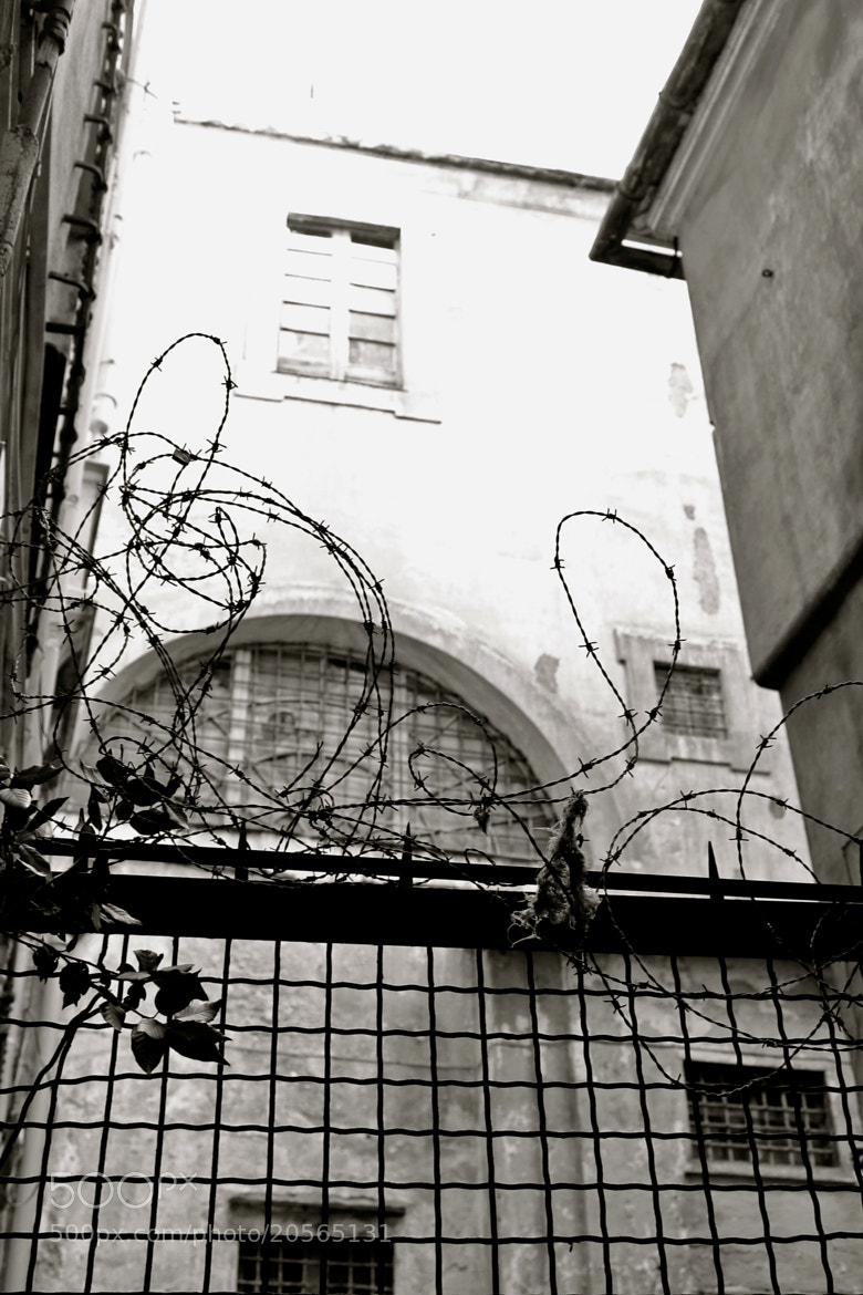 Photograph Barbed restraint by Silvia Sabbadini on 500px