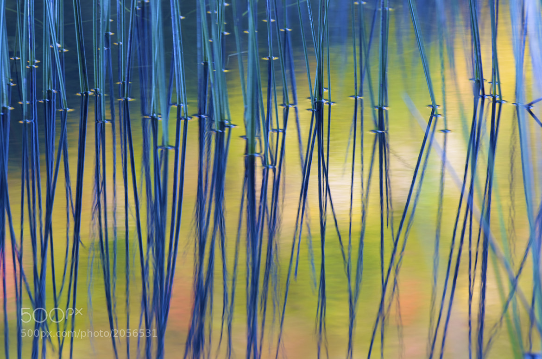 Photograph Grass Lake, Adirondacks by Tom Schmitt on 500px