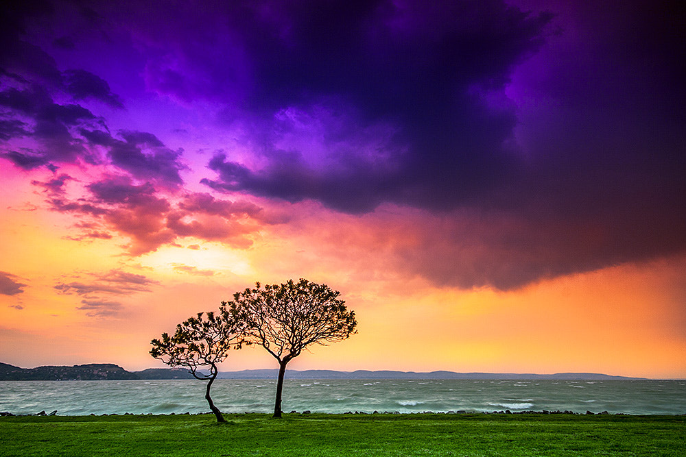 Photograph Two lonely tree by F Levente on 500px