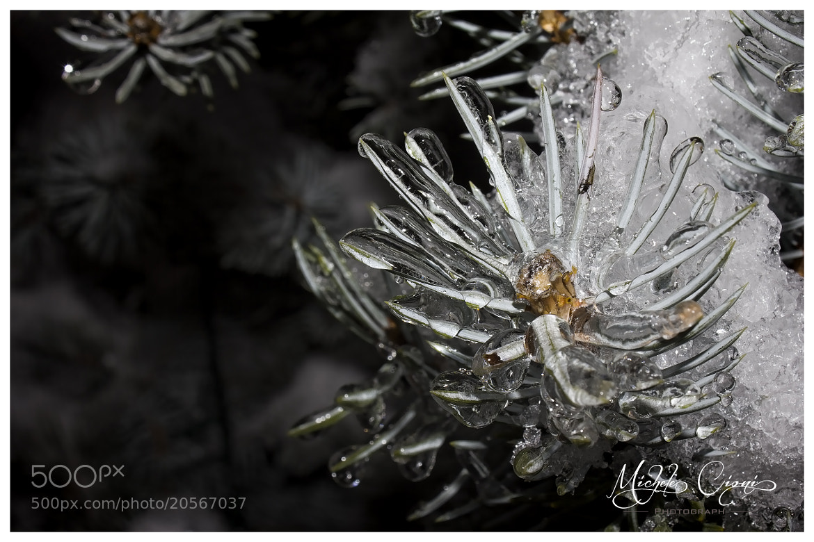 Photograph Icy Needles by Michele Cioni on 500px