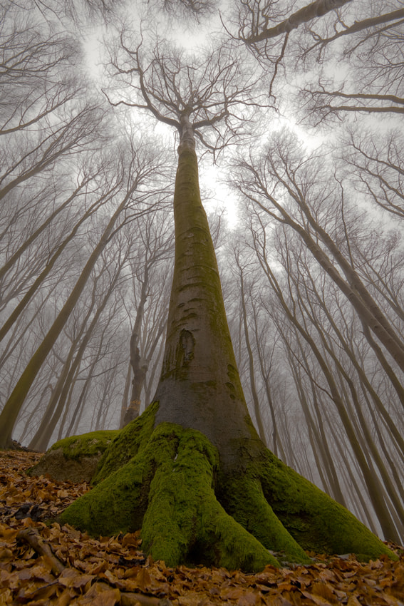 Photograph The Beech with Human Face by Leszek Paradowski on 500px