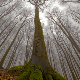The Beech with Human Face by Leszek Paradowski (paradowski)) on 500px.com