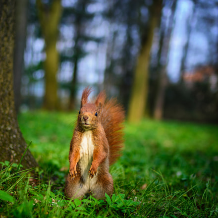 A squirrel in spring , Nikon D7200, Tamron SP 35mm f/1.8 VC
