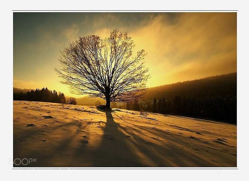 Photograph Last Light by Josef Steinbach on 500px