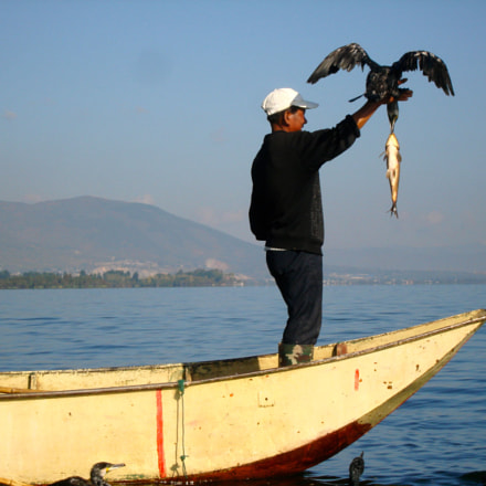 Cormorant fishing, Sony DSC-W100