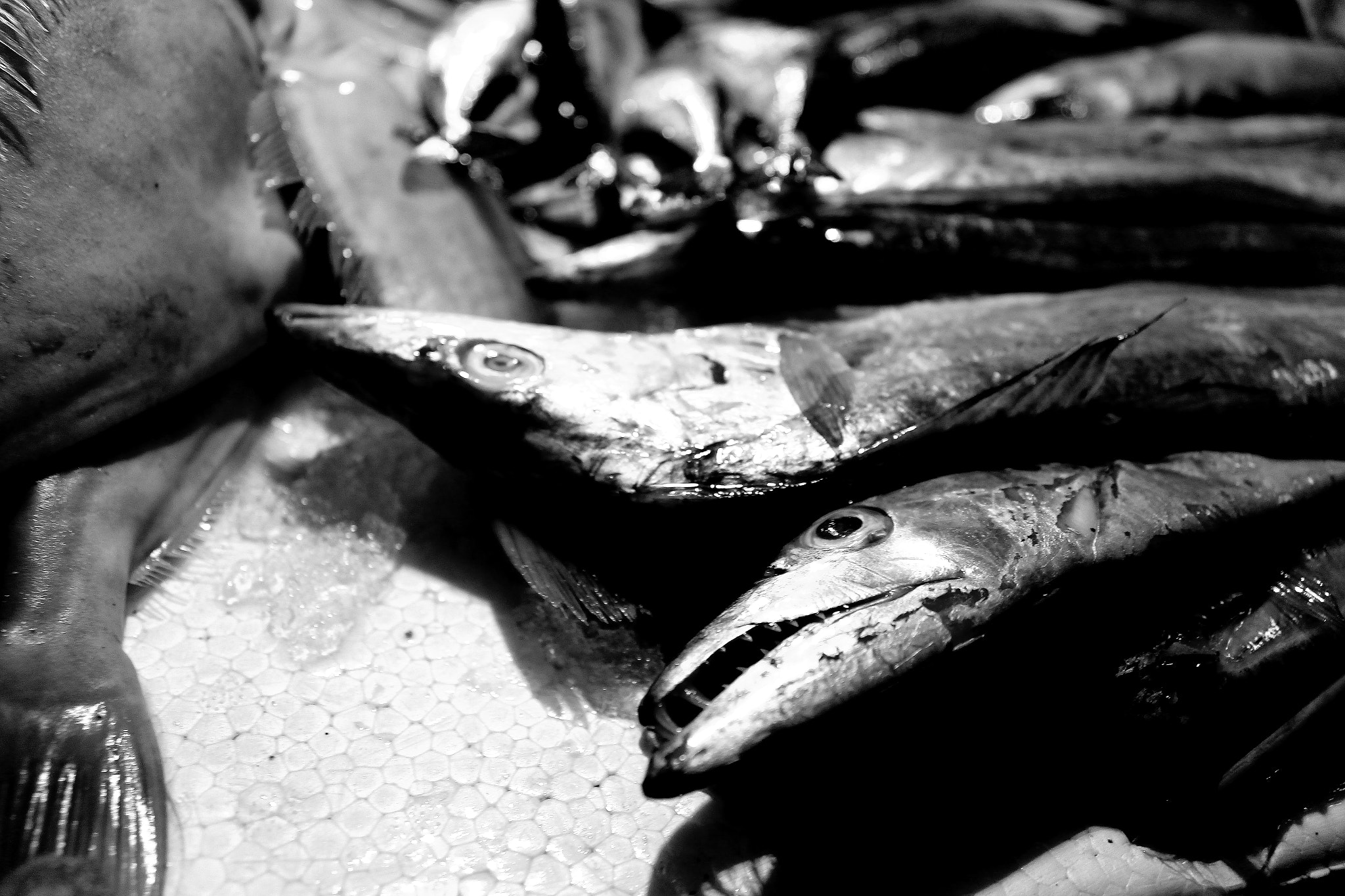 Photograph poor fish by Allen_zx on 500px