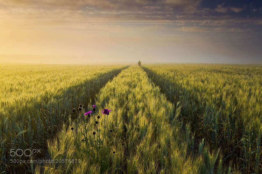 Photograph July by Leszek Paradowski on 500px