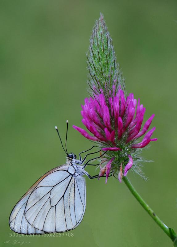 Photograph Butterfly by Adem Yağız on 500px