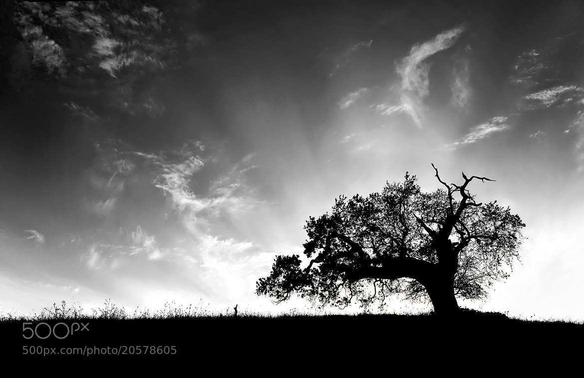 Photograph Oak by Greg Gibb on 500px