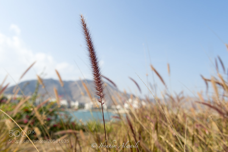 Photograph Macro by Ibrahim AlWaili on 500px