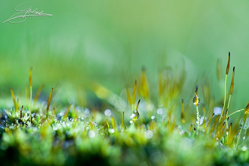 Photograph Littleworld by Elodie Imbert on 500px