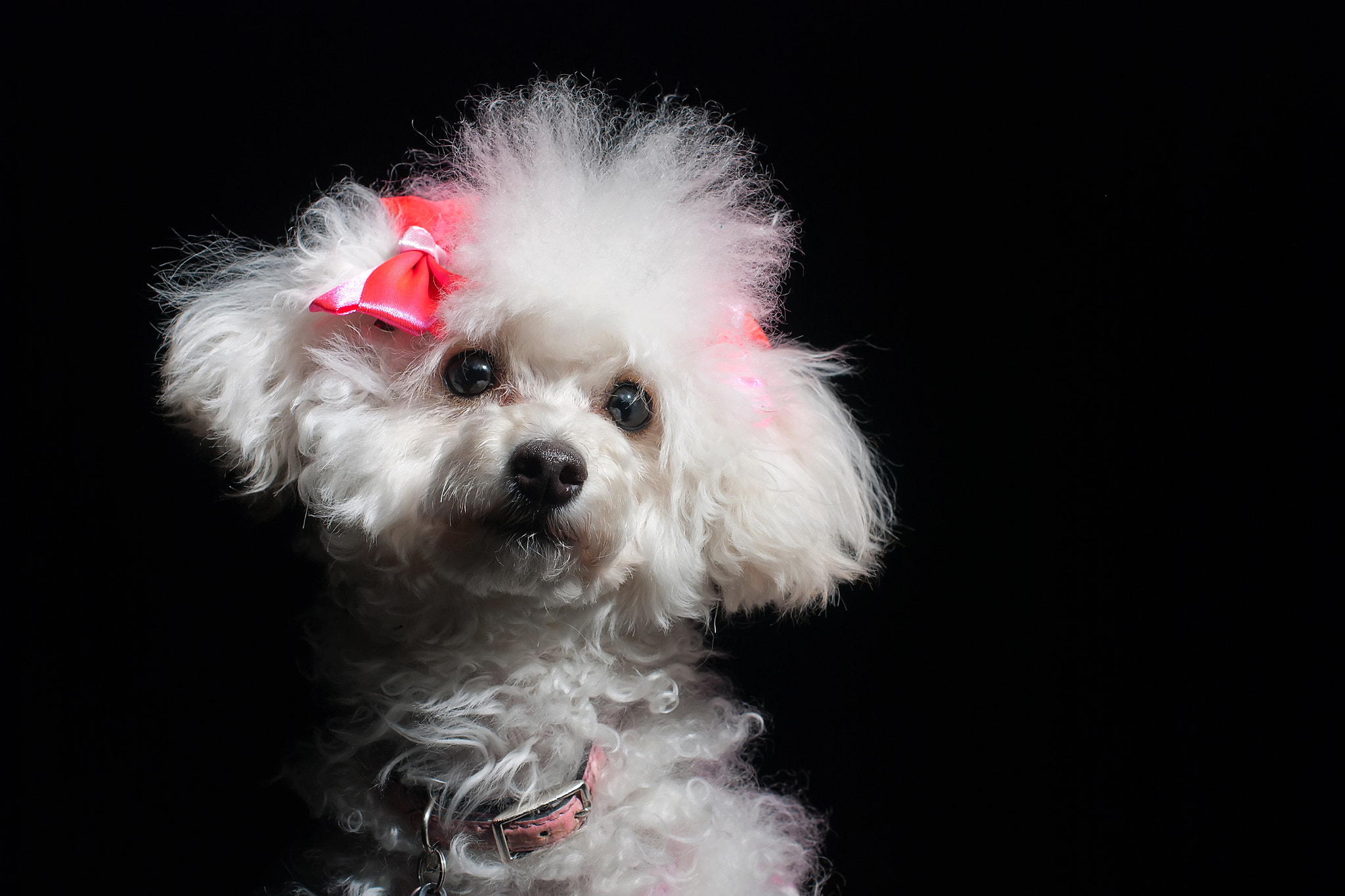 Photograph Pooch by Greg Gibb on 500px