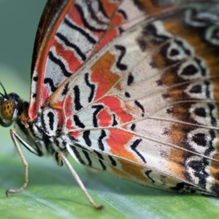 Colored Butterfly, Canon EOS M5, Canon EF 100mm f/2.8 Macro USM