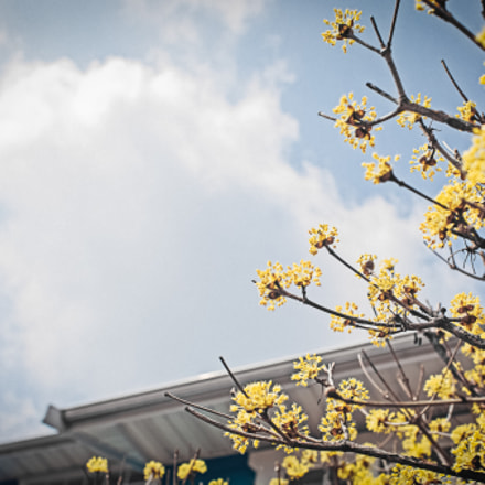 New Spring, Canon EOS 6D, Canon EF 28mm f/1.8 USM