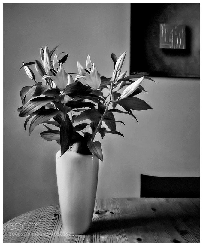 Photograph Bouquet by vincenzo monaco on 500px