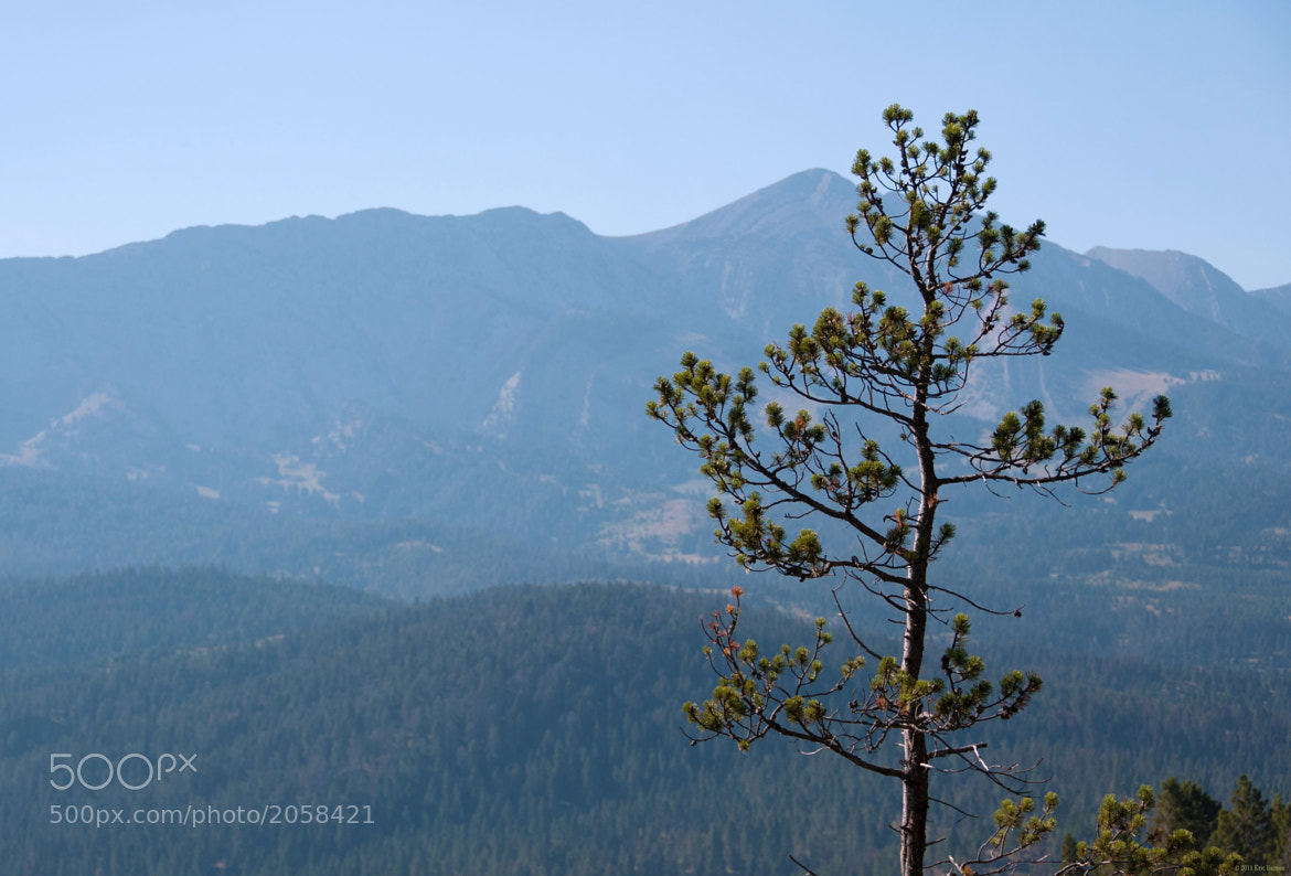 Photograph Tree & Mountains by Eric Barnes on 500px