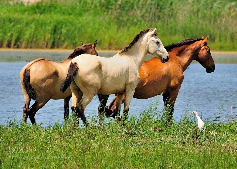 Photograph Cavalls i espluga by Joan Oliveras on 500px