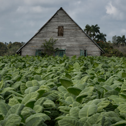 Tobacco farm, Nikon D800, AF-S Zoom-Nikkor 80-200mm f/2.8D IF-ED