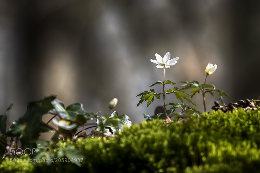 Small flower on the mound