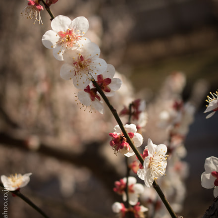 spring's comming, Canon EOS 8000D, Canon EF-S 18-55mm f/3.5-5.6 IS STM