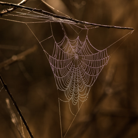 Web site, Canon EOS 5D MARK III, Canon EF 300mm f/4L