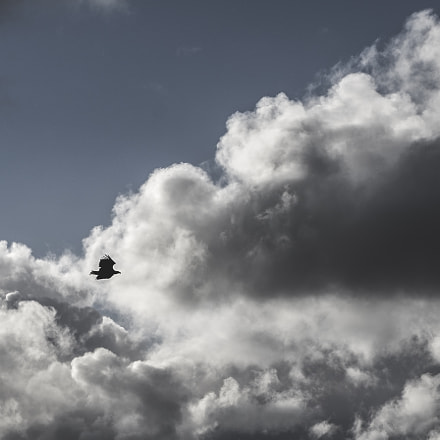 Eagle in the sky.jpg, Pentax K-5, smc PENTAX-DA 16-45mm F4 ED AL