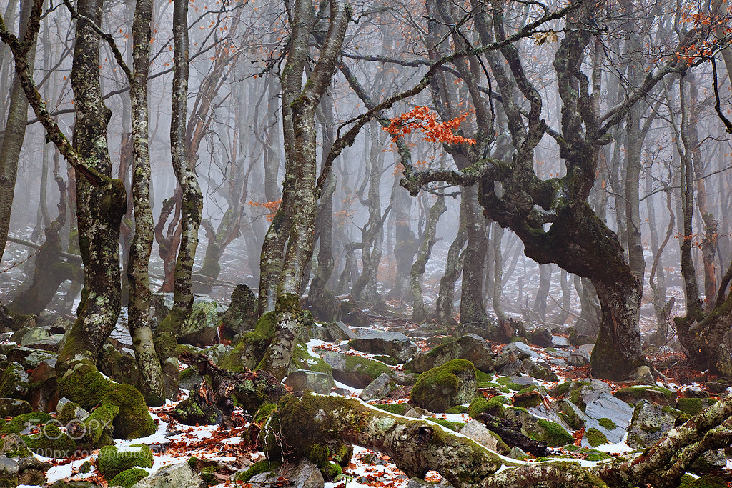 Photograph The enchanted forest by Enrique F. Ferrá on 500px