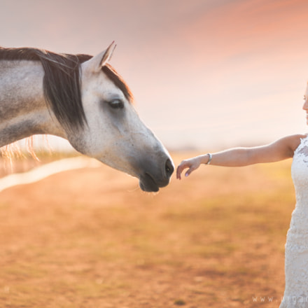 Equine Curiousity, Canon EOS 5D MARK II, Canon EF 85mm f/1.2L