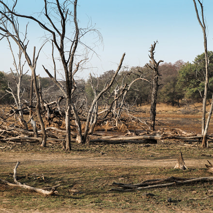 Ranthambore Dry Land, Canon EOS M5, Canon EF-M 15-45mm f/3.5-6.3 IS STM