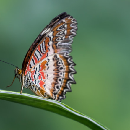 Butterfly, Canon EOS 7D MARK II, Canon EF 70-300mm f/4-5.6L IS USM