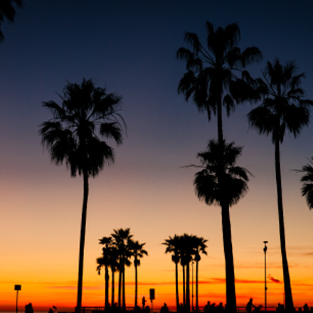 Palmtrees Venice Beach, Panasonic DMC-GH1, Lumix G Vario HD 14-140mm F4.0-5.8 Asph. Mega OIS
