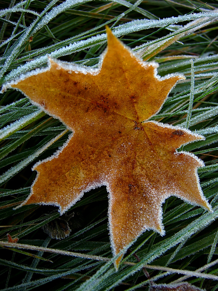 Photograph Frost Pinch I by Ina Fahlsten on 500px