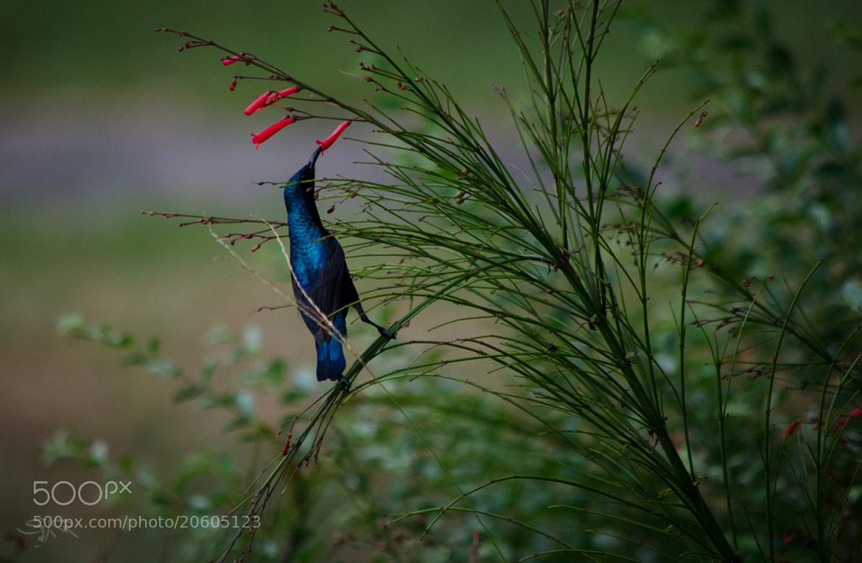Photograph Body Balance!!! by Subhash Radhakrishnan on 500px