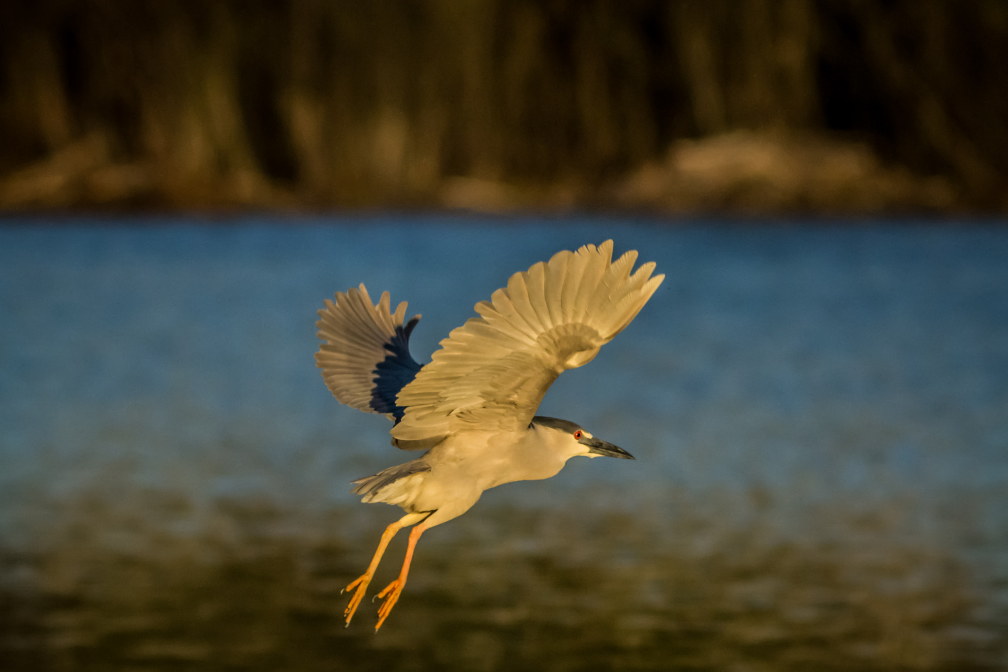 Photograph Night Heron by Anuj  Raj on 500px
