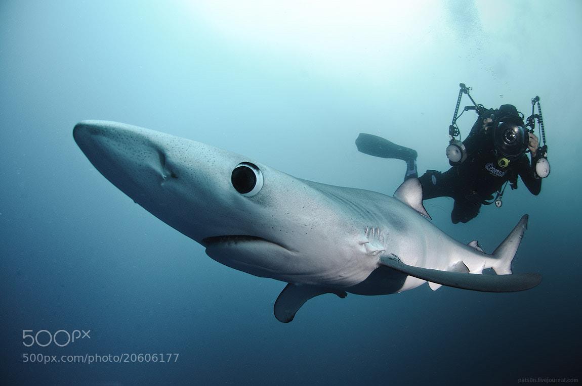 Photograph blue shark story pt.2 by Alexander Safonov on 500px