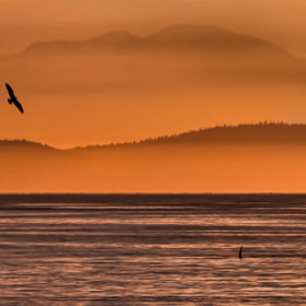 West Coast Sunset by Mark Bates (321photos)) on 500px.com