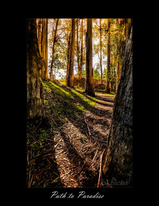 Photograph Path to Paradise by Ron Becker on 500px