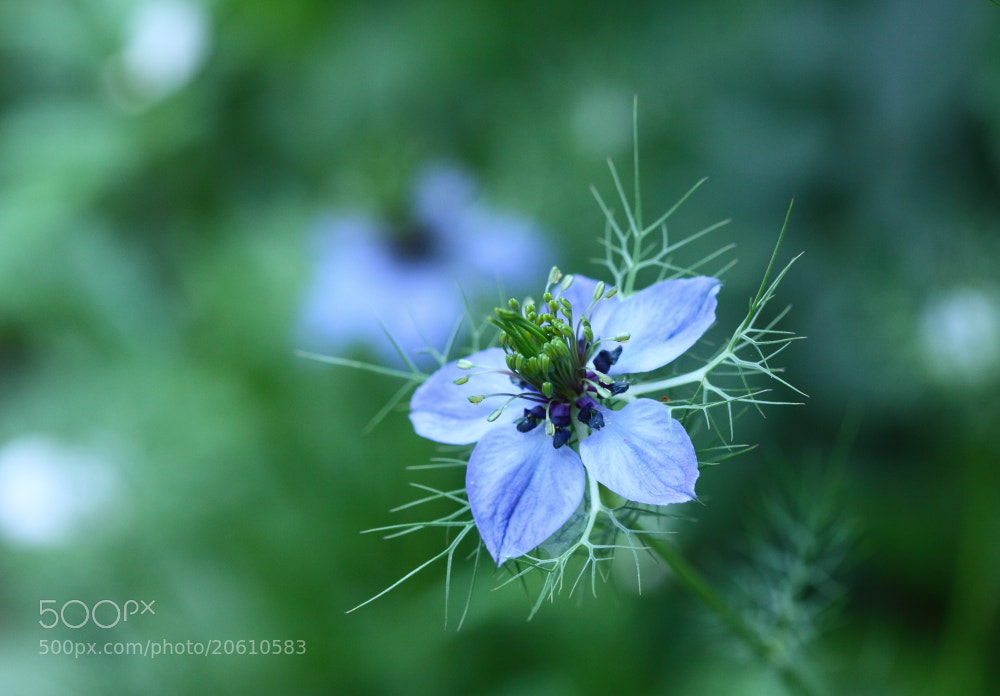 Photograph My favorite flower by Sueo Takano on 500px