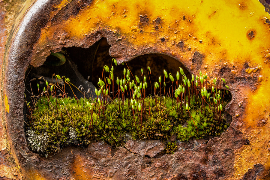 Moss and Rust